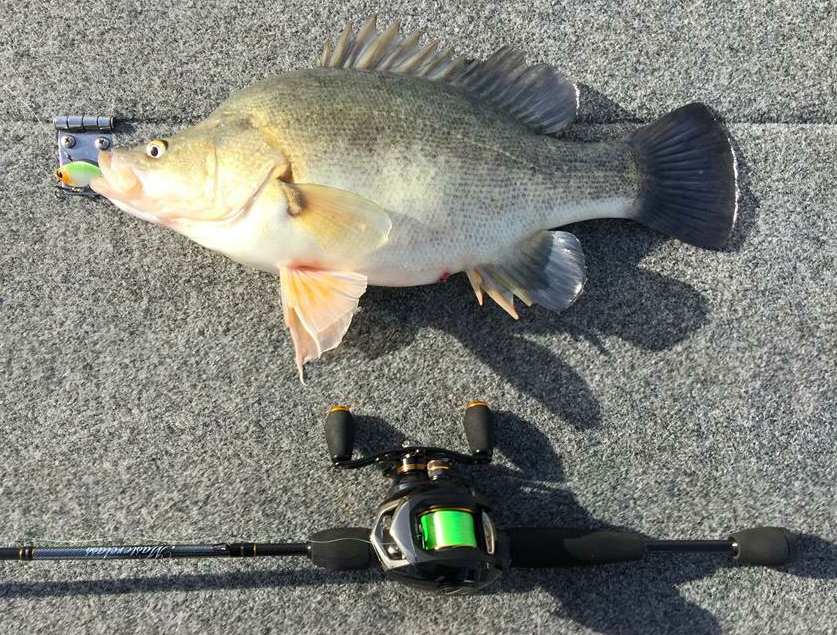 yellow belly pulse rod combo cropped
